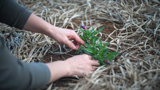 Kertészeszközök széles választéka